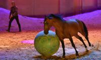 evenement EQI-Spectacle-equestre-Tous-droits-reserves-aux-producteurs-du-spectacle DSC_1286reccorr2.thumb.jpg